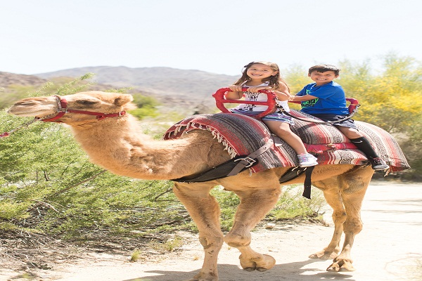 Camel Ride And Walking in Atlas Mountains
