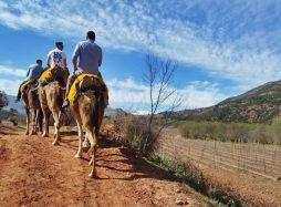 Atlas Mountains Camel Ride