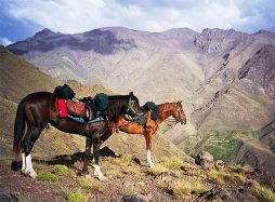Atlas Mountains Horse Trek   Toubkal Treks