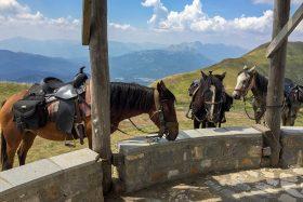Horse Trek in Atlas Mountains